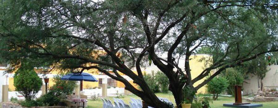 Jardín, Quinta San Ignacio, Aguascalientes.