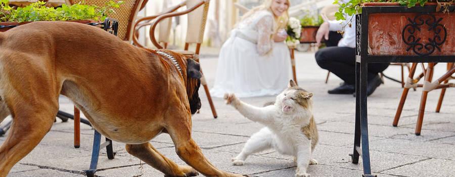 Свадьба в Амальфи