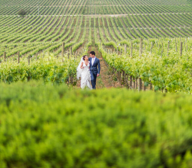 Destination Wedding at Casas del Bosque Vineyard, Chile