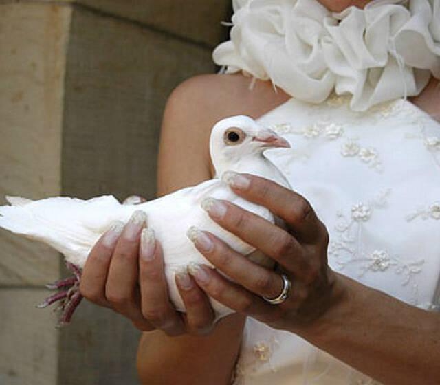 Beispiel: Hochzeitstaube, Foto: Hochzeitstauben Berlin-Brandenburg.