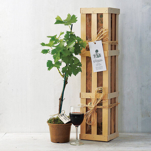 Original wedding gift ideas for couples that have everything - Gifts for the gardener who has everything ...