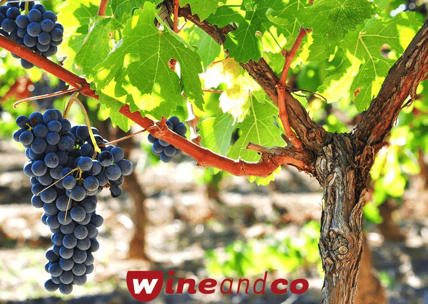 Trouvez les vins adaptés pour votre jour J