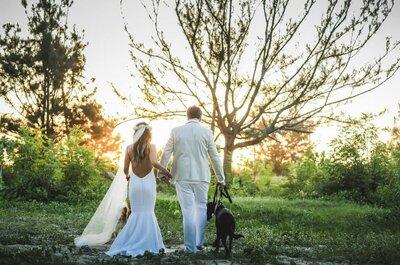 Cómo organizar una boda con mascotas sin que resulte un desastre