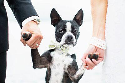 Lleva tus mascotas a tu boda: ¡Sorpréndelos a todos!