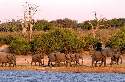 Lune de miel extra : le Botswana, terre des amoureux de la nature et des safaris