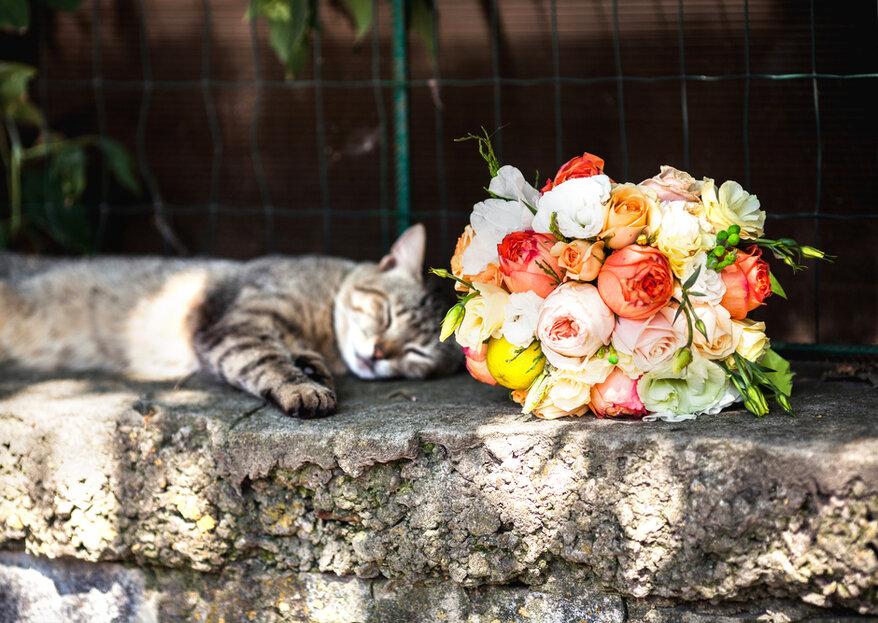 Frau heiratet ihre Katze: Schweizer Gerichte erlauben seit dieser Woche Eheschliessung zwischen Mensch und Tier