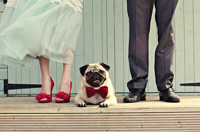 Las bodas pet-friendly, una idea perfecta para integrar a tus mascotas preferidas