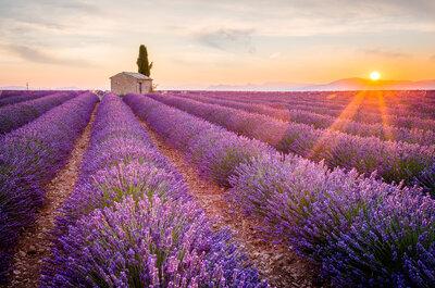 Wesele pachnące ziołami, czyli 8 pomysłów ślubnych inspirowanych Prowansją.