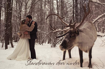 Скандинавская сказка: зимняя свадьба Дмитрия и Дарьи с северным оленем