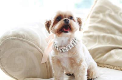 Bodas y mascotas: 6 tips para incluir a ese animalito especial en tu boda... ¡Toma nota!
