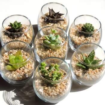 Mini terrarios con cactus. Credits Mercado libre