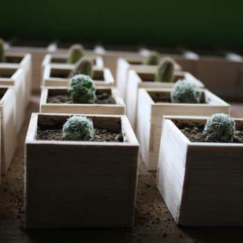 Los recuerdo de boda también pueden tener vida. Regala un cactus miniatura en tu boda. Foto de Recuerdo Viviente