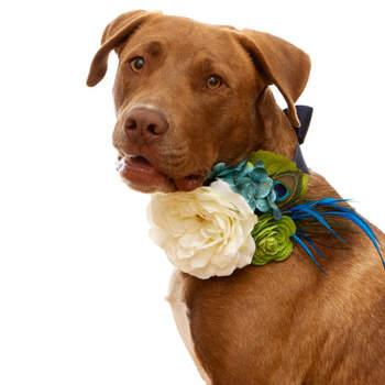 febdf51acc801e Accessori per cani e gatti per un matrimonio. © CharlieHeartsDiesel