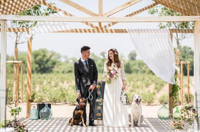 Invitar a vuestros perros a la boda ¡sí es una gran idea!