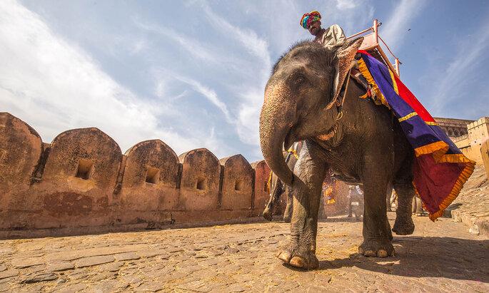 Índia. Créditos: C Rayban on Unsplash
