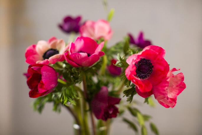 Foto vía Shutterstock: AnnaHappy