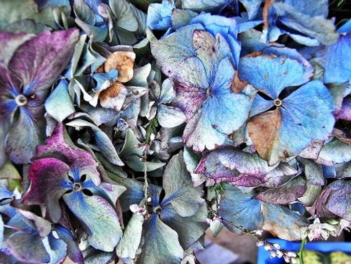 Getrocknete Hortensienblütenblätter für die Hochzeitstischdekoration. Foto: Angelina Ströbel / pixelio.de