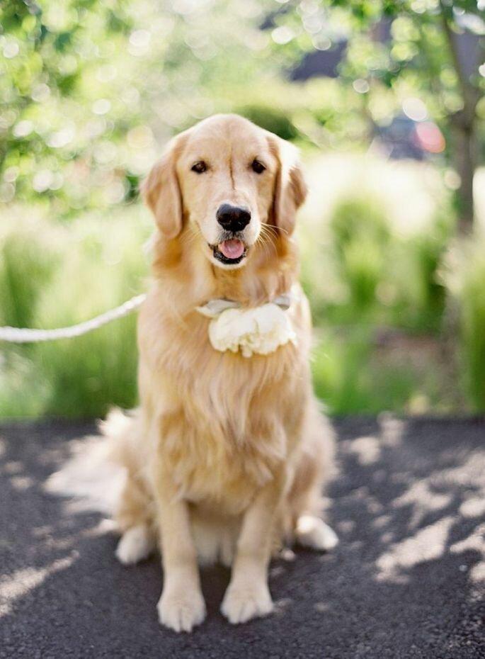 Lieber einen Hund als einen Mann! Foto: Jose Villa