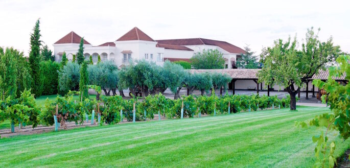 Bodegas y Viñedos Casa del Valle