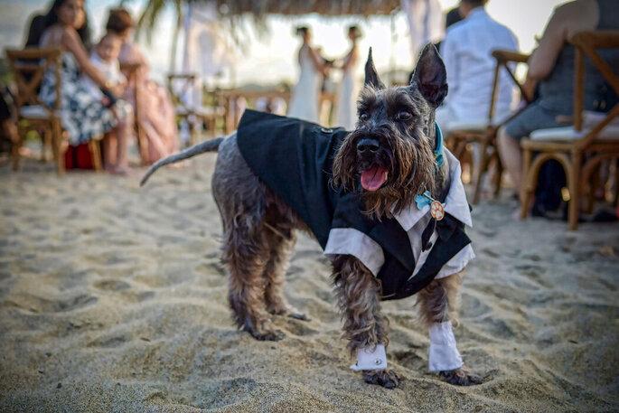 Perrito con traje en ceremonia de bodas en la playa