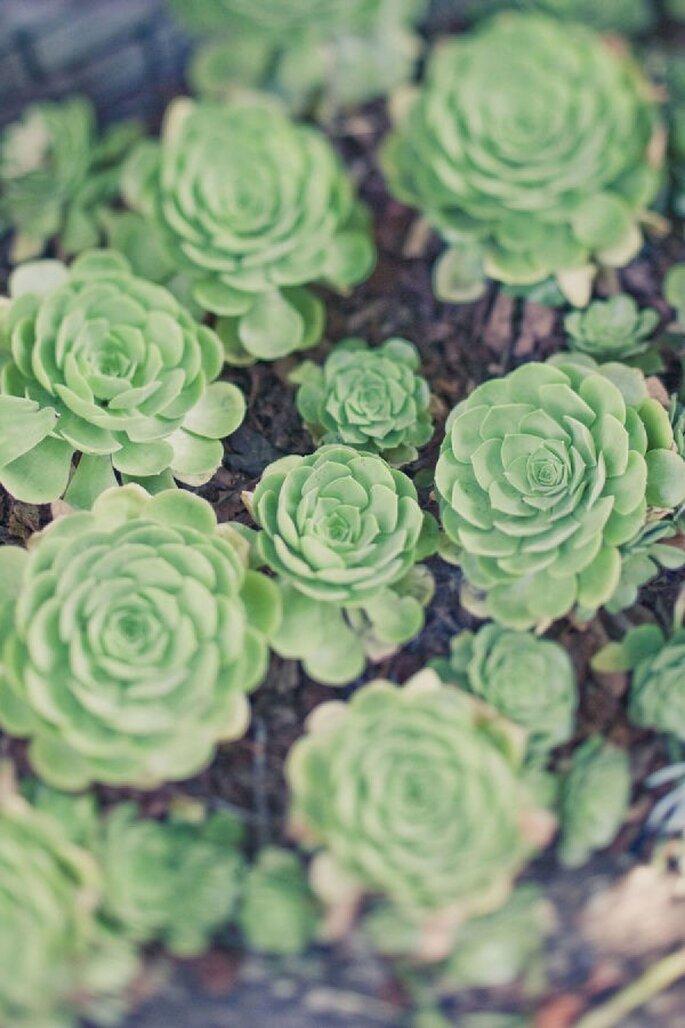 Verschiedene Pflanzen für Ihre Hochzeitsdekoration - Foto Onelove Photography