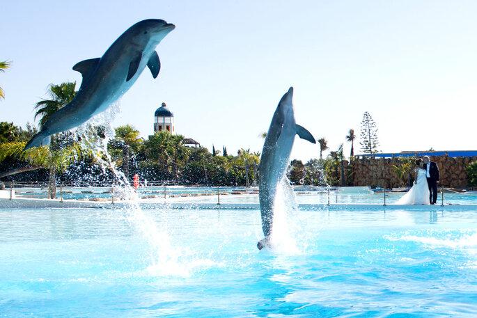 Golfinhos na Enseada Tropical