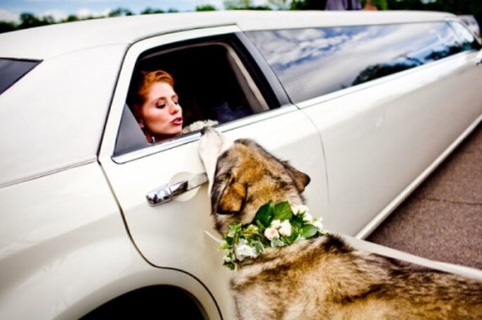 Perros pajecitos de boda. Foto de Twin Lens Photography en Style Me Pretty