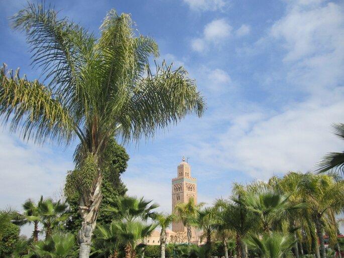 palm-tree-1239681_1920