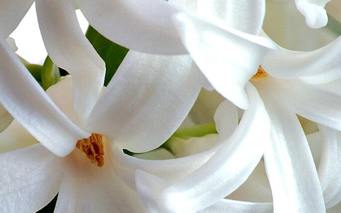Matrimonio Simbolico Significado : Flores de temporada para la decoración bodas