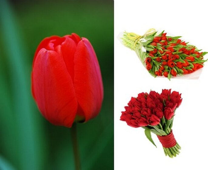 Tulipanes rojos simbolizan el amor perfecto.