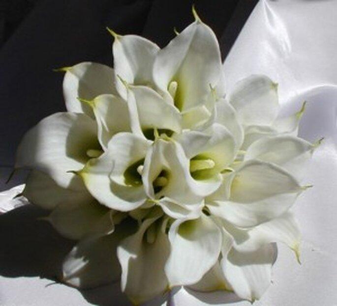 Un bouquet semplice, fatto solo con calle bianche