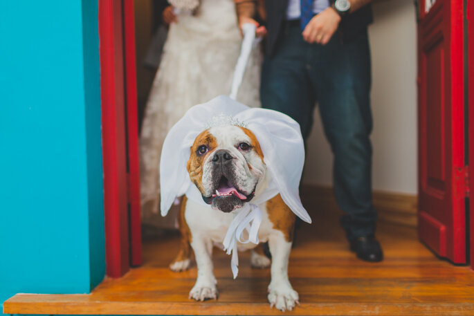 Pets em casamentos