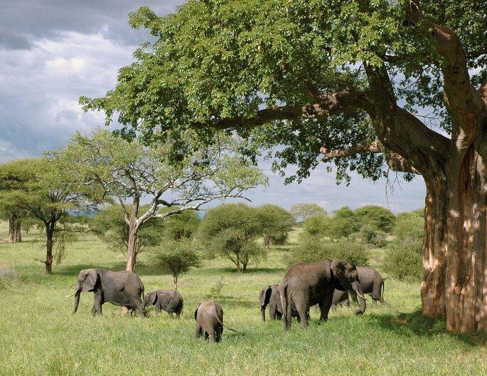 Tanzânia. Pixabay