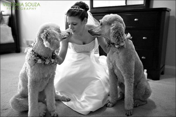 Disfruta de una sesión de fotos de boda con tu perro - Foto Victoria Souza