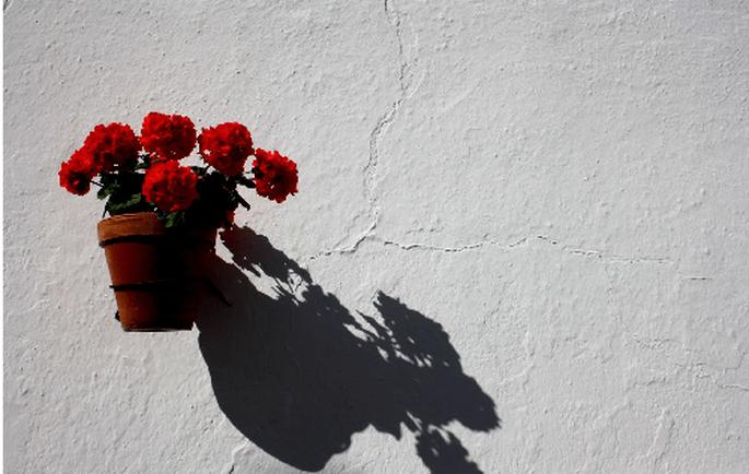 En una boda flamenca no pueden faltar los geranios. Foto: Patronato de turismo Costa del Sol.