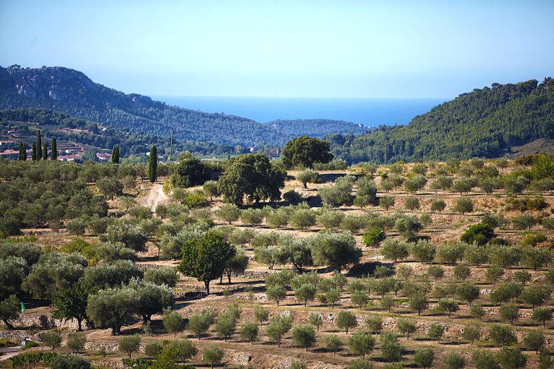 Domaine Souviou