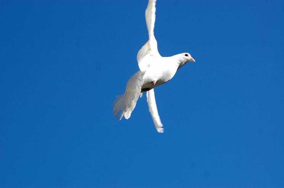 Nice colombes