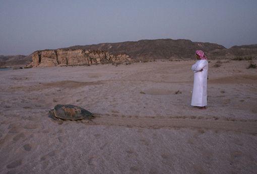 OMAN Ras al Jins - riserva delle tartarughe
