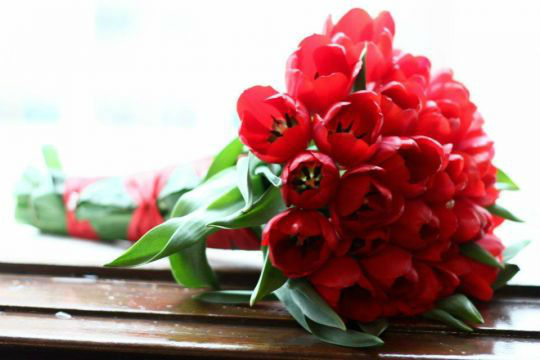 Floricultura Bromélia
