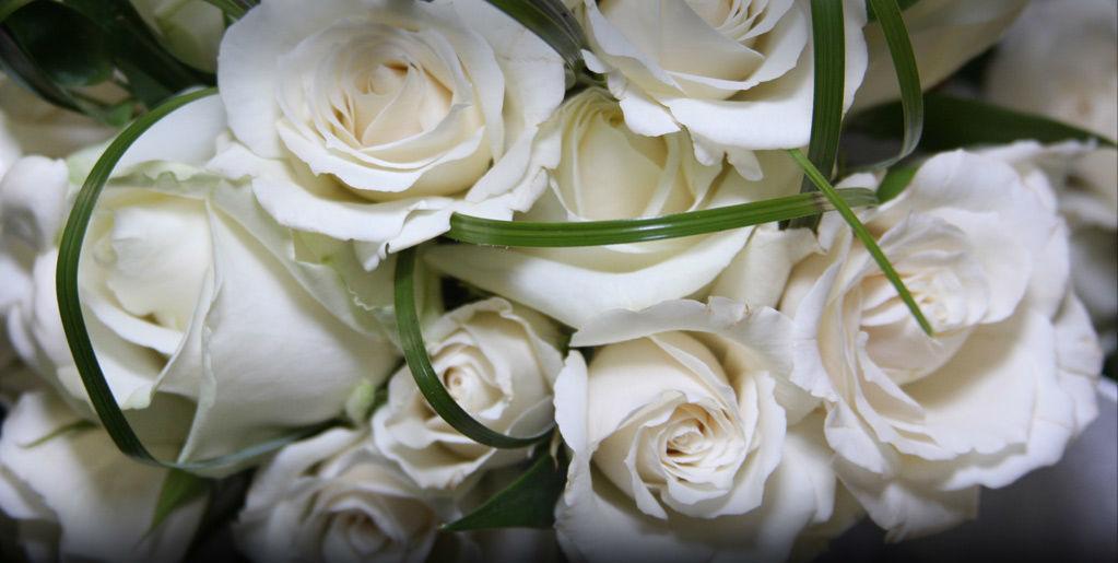 Beispiel: Weiße Rosen, Foto: Brenneralm.