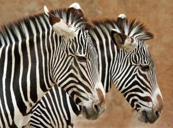 ¿Un Safari? - brujulaviajes.com