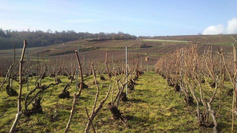 Vignes en hiver, Champagne Bourgeois-Boulonnais