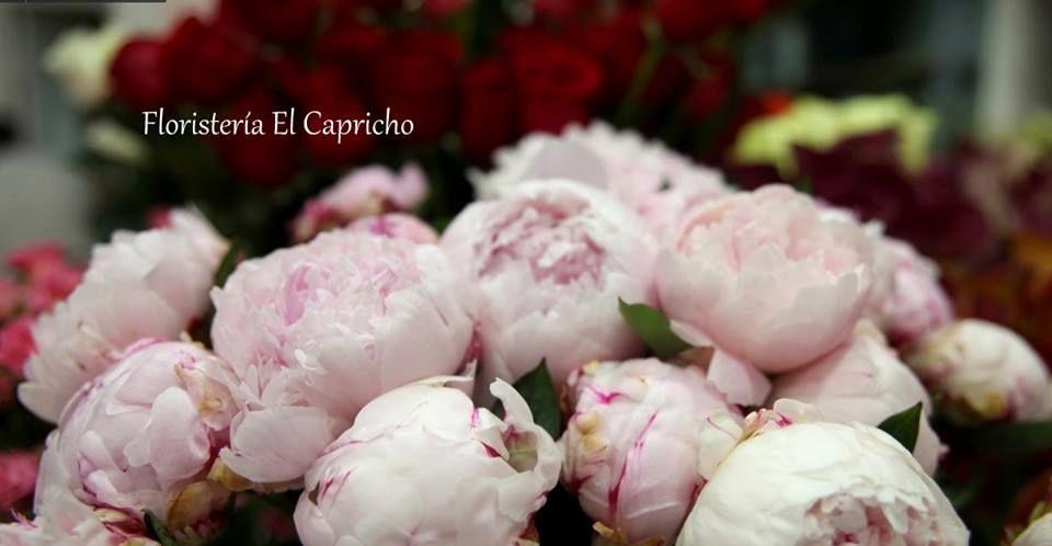 Floristería El Capricho