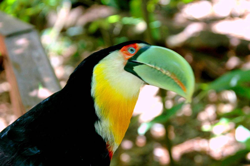 Le parc aux oiseaux à Iguaçu