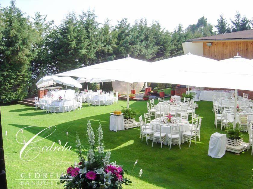 Cedrela cedros bodas - Decoraciones de jardin ...