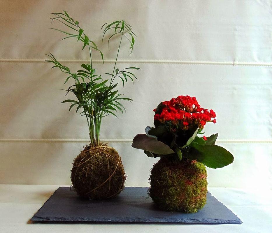 Plantas & Musgo