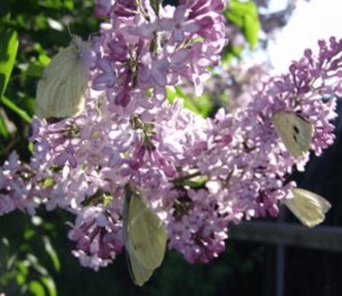 Beispiel: Wunderschöne Schmetterlinge, Foto: Schmetterlingszauber.