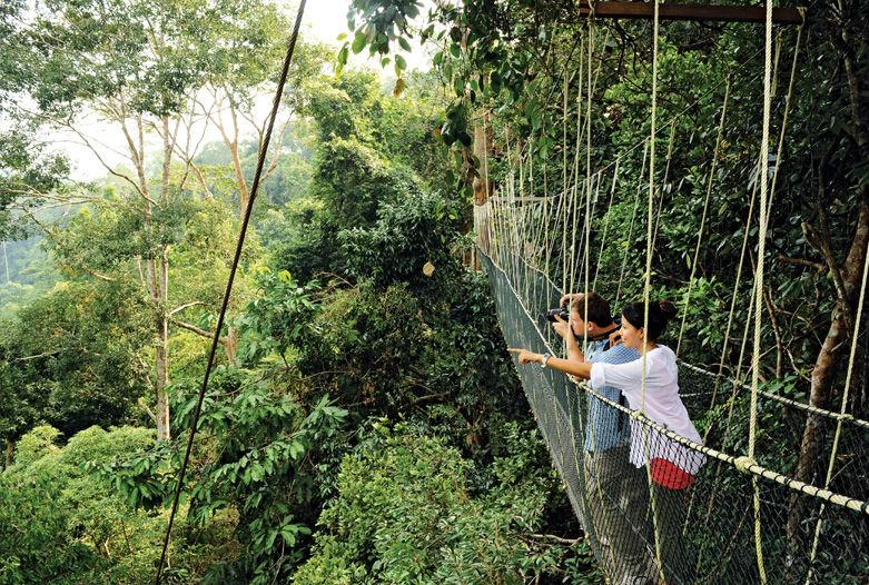 Canopy Walk en Taman Negara, Malsia