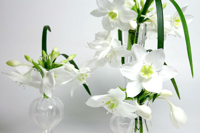 Marsano Blumen