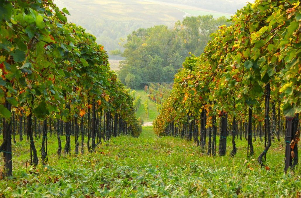 Casale nelle Vigne
